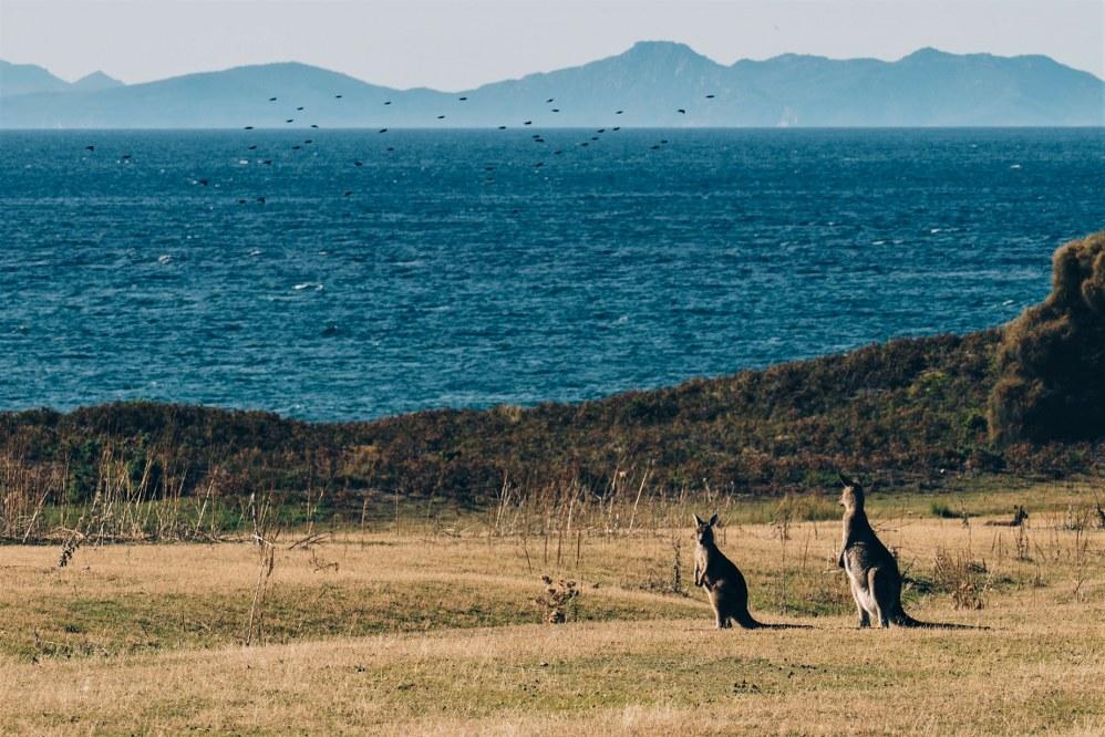 Maria Island - road trip in Australia with kids