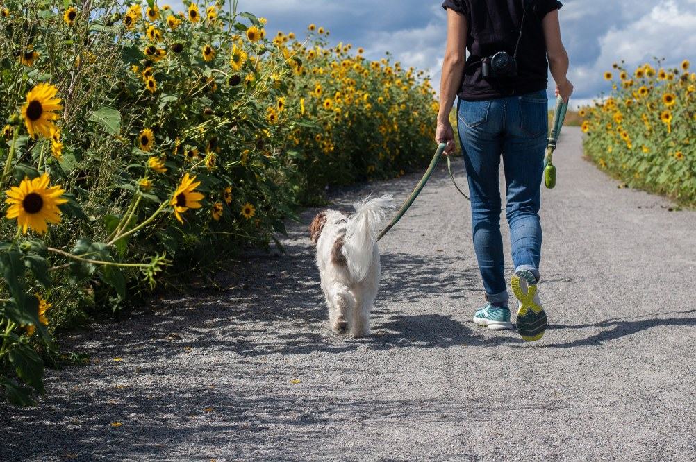dogs keep us fit - benefits of owning a dog